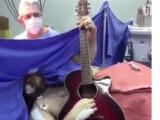 Bild: Akustik-Konzert während einer Hirn-OP - in Brasilien offenbar nichts ungewöhnliches.