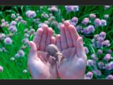 Bild: Die Grenzen verschmelzen: Magic Leap will virtuelle Realität und reale Welt miteinander vermischen.