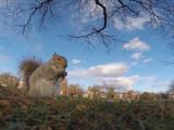Bild: Noch verhält sich das Hörnchen ganz brav und nagt an seiner Beute...