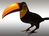 Bild: Eine Grafik zeigt die Schnabelprothese des Tukans.