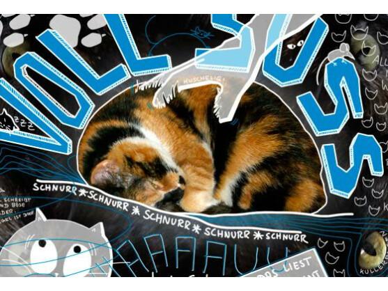 Voll süüüß! Katzen im Internet.