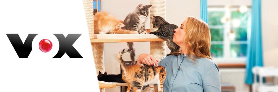 Die Katzen Kita Vox